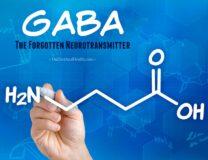 Gaba – The Forgotten Neurotransmitter