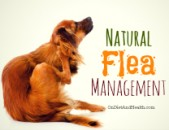 Natural Flea Control for Dogs or Cats
