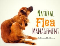 Avoid chemicals and manage fleas naturally