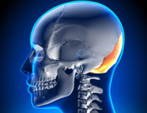 Image of the bones in the head