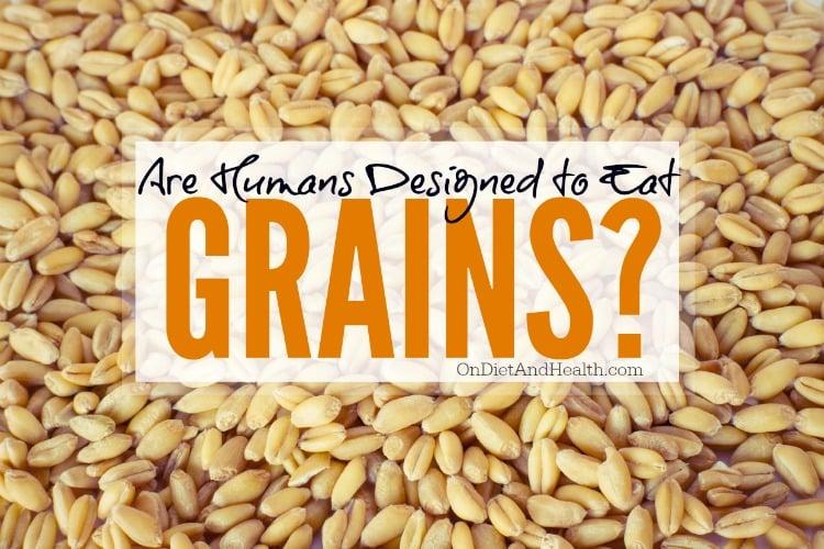 Should humans be eating grains?