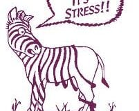 zebra stressed