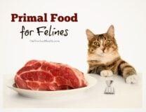 Primal Food For Felines