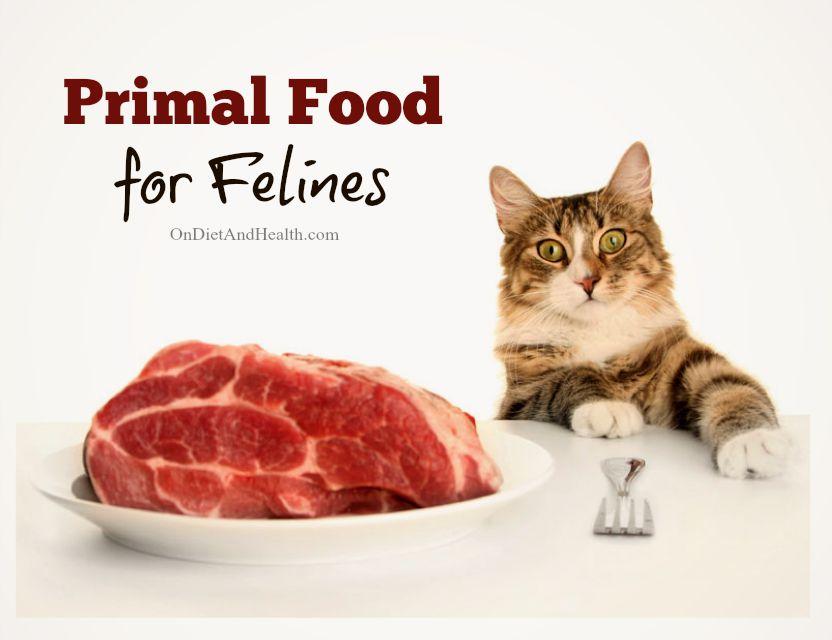 Primal Food for Felines // OnDietAndHealth.com