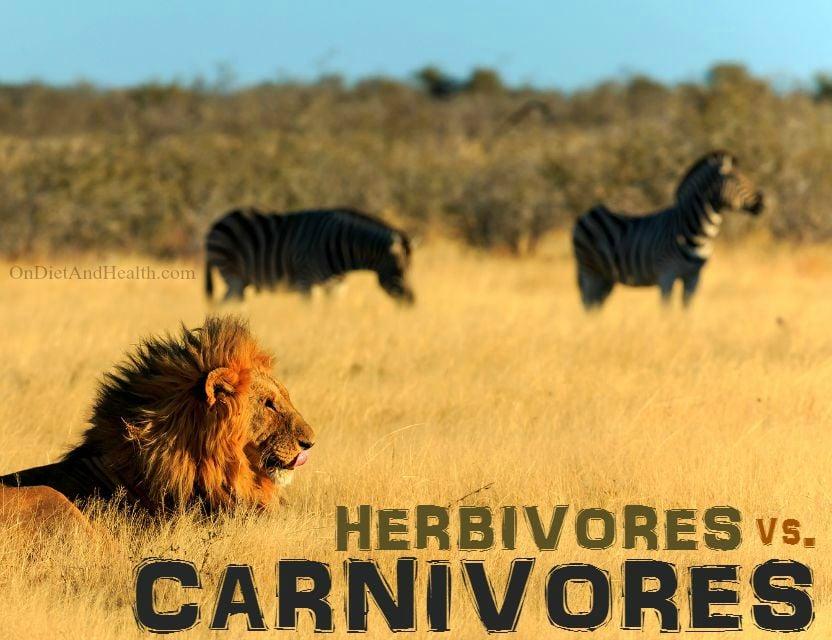 Herbivores vs carnivores // OnDietAndHealth.com