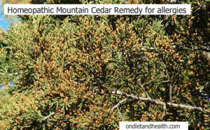 Needing cedar allergy support