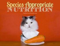 Do cats eat carrots on a species appropriate diet?