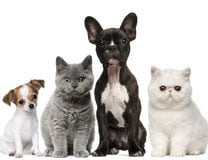 learn how to keep your cats and dogs healthy naturally