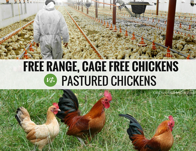 free range chicken and cage free chicken