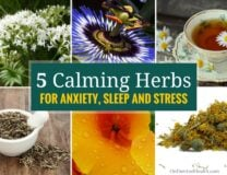 Here are 5 calming herbs for anxiety, sleep and stress. They can be safely combined with each other and taken frequently. Here's how to select the best herbs for anxiety, sleep, stress and ADHD.