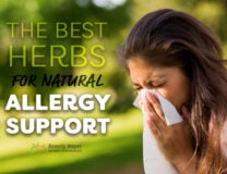 The Best Herbs for Natural Allergy Support