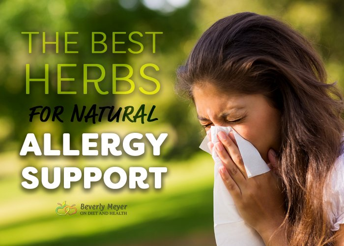 What are the best herbs for natural allergy support to help sneezing sufferers?