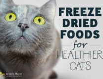 Freeze Dried Foods for healthier cats will save money on vet bills and reduce kidney failure, the leading cause of cat death.