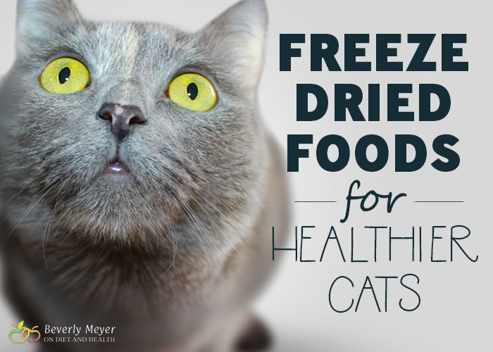 Freeze Dried Foods for healthier cats will save money on vet bills and reduce kidney failure, the leading cause of cat death. What did cats evolve to eat? Small prey, including the organs and bones. Healthier happier cats with raw freeze-dried foods. Here's four top brands I use. //OnDietandHealth.com