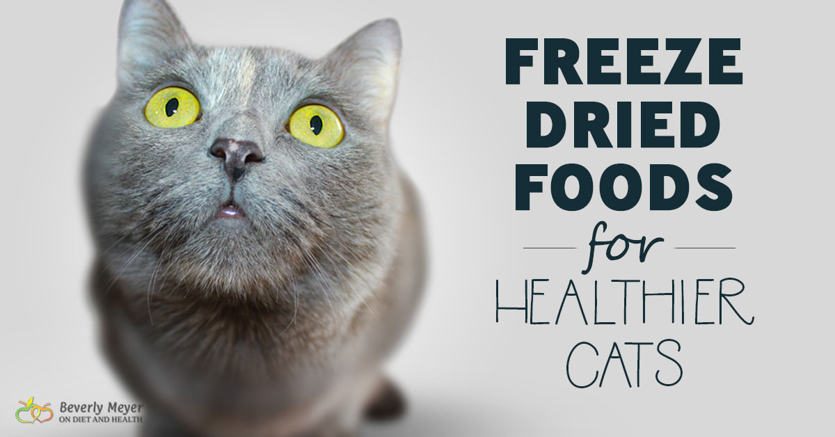 Freeze Dried Foods For Healthier Cats