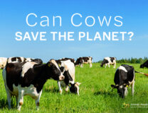Can Cows Save the Planet?